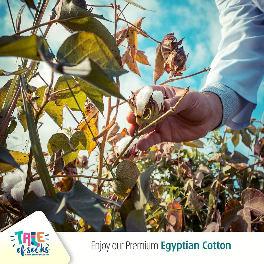 Tale of Socks' Class A Certified Premium Egyptian Giza Cotton