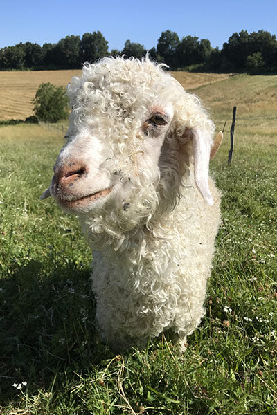 L'Envers - Hand Knitted pieces - Liliana's angora goat