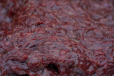 FROZEN BLOODWORM