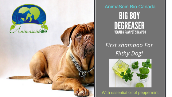 Big Boy Degreaser Shampoo  (Collagen,  d-limonene ( citrus oil) &  rice protein) - AnimaBio Care