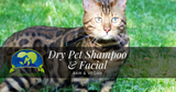 Dry Shampoo (Vegetable silk protein - allantoin - oat protein - kaolin clay ) - AnimaBio Care
