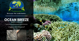Ocean Breeze Dead Sea Mud Collection - Anti-Dandruff Action - AnimaBio Care