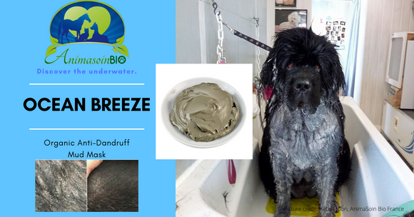 Ocean Breeze Mud Mask - First Aids & Anti-Dandruff Action - AnimaBio Care