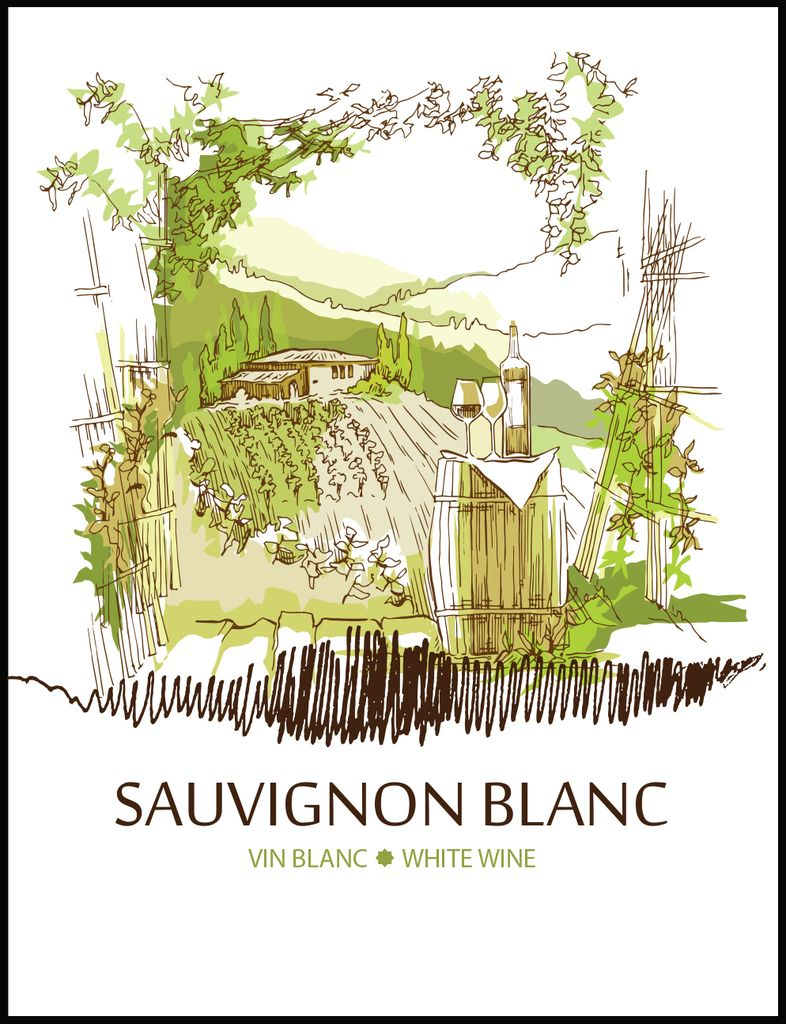 Sauvignon Blanc Wine Labels 30/pack