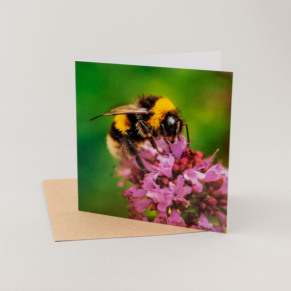 Bumblebee and flower card wildlife trust bumblebee card