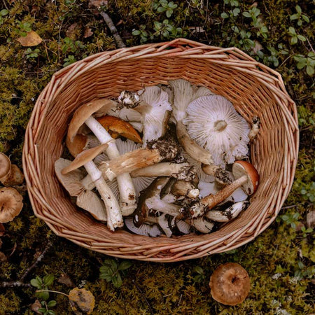 All you need to know about mushrooms and immunity