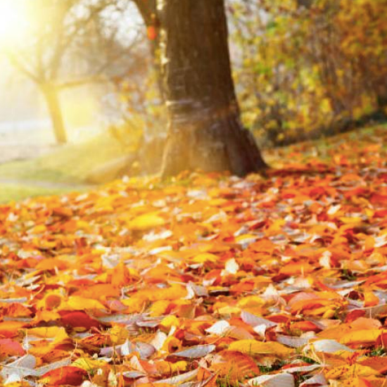 Expert Tips for Fighting Fall Allergies
