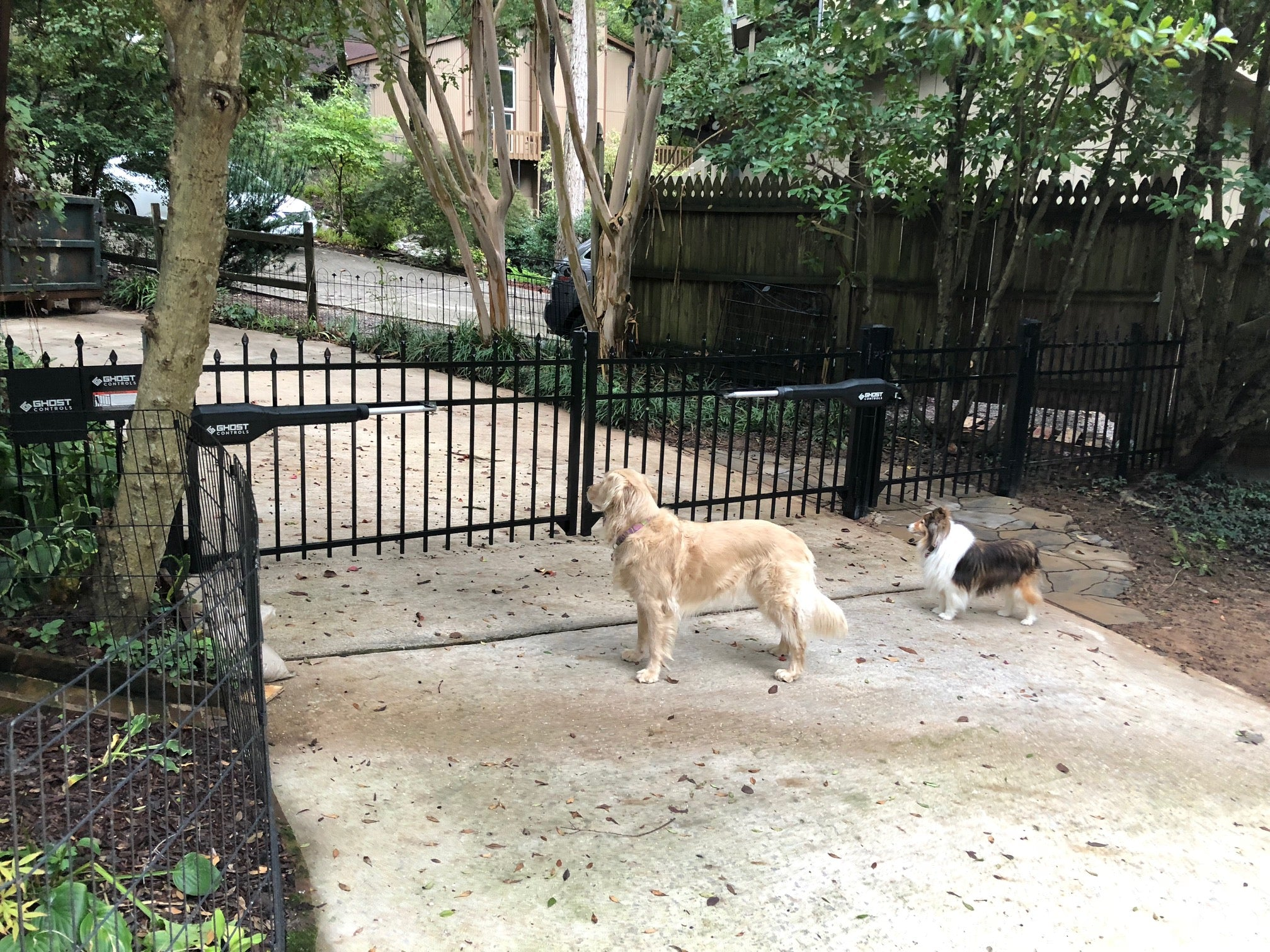 TDS2 on Gate with Dogs