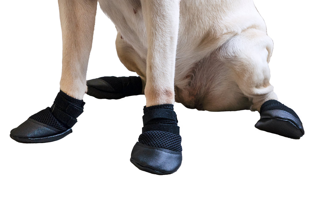 Dog Paws- Wearing Zoof Grips