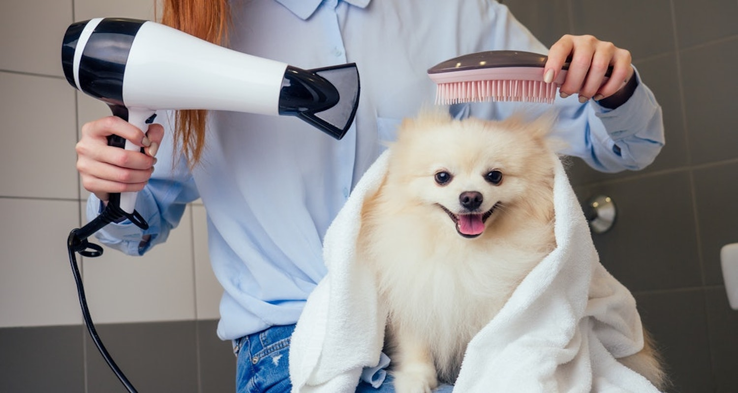 Blow drying and combing puppy's fur