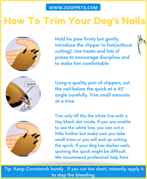 How To Trim Your Dog's Nails
