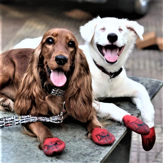 Two Doggos wearing Spiderman Dog Shoes