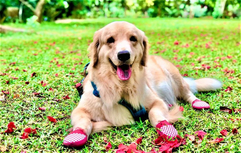Dog sitting on grass wearing shoes