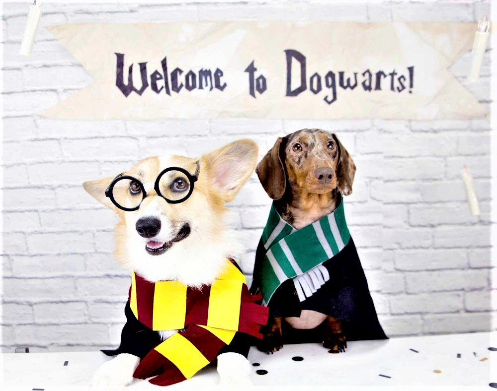 Harry potter Dogs- Welcome To Dogwarts