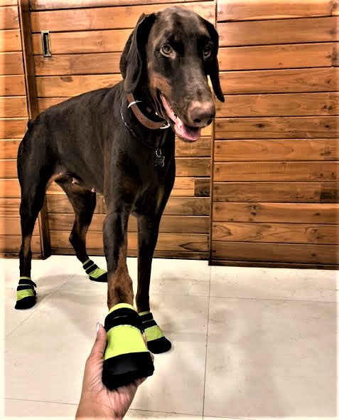 Zoof Plops: Rainy Shoes For Dogs