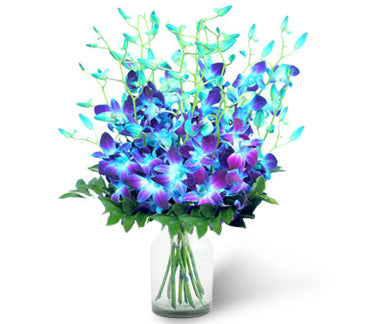 Majestic Dream - Send Flowers Online