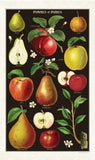 Cavallini & Co. Vintage Tea Towels