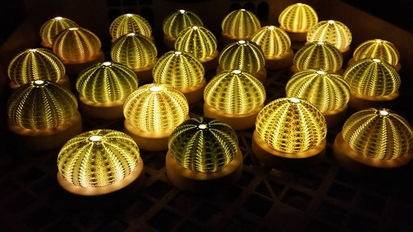 Green Urchin Lamps - ***Limited Edition***