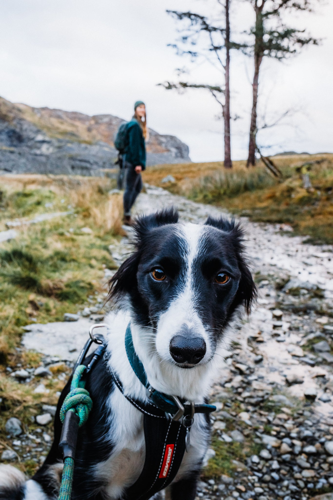 Women's winter boots, Women's leather boots, women's ankle boots, Jasmine, Ivy the collie, Snowdonia
