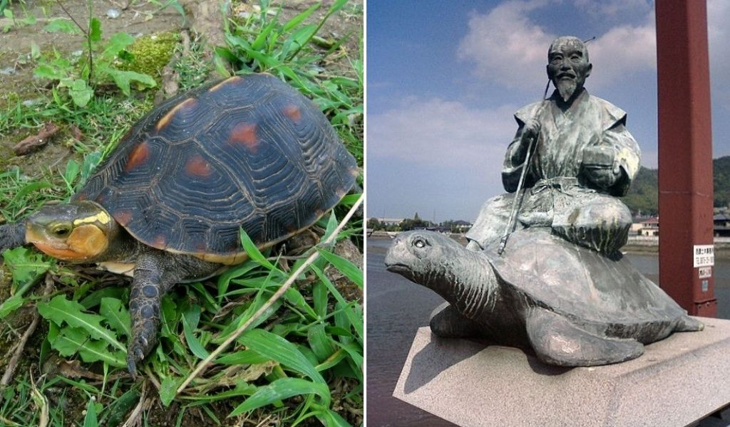 the turtle in japan