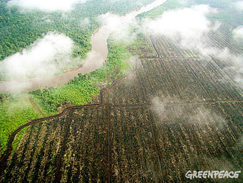 Aerial-view-of-Riau-C-Greenpeace