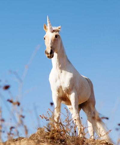 photo vrai licorne blanche jolie