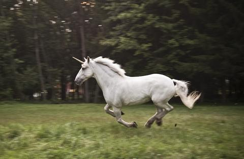 photo vrai licorne qui galope