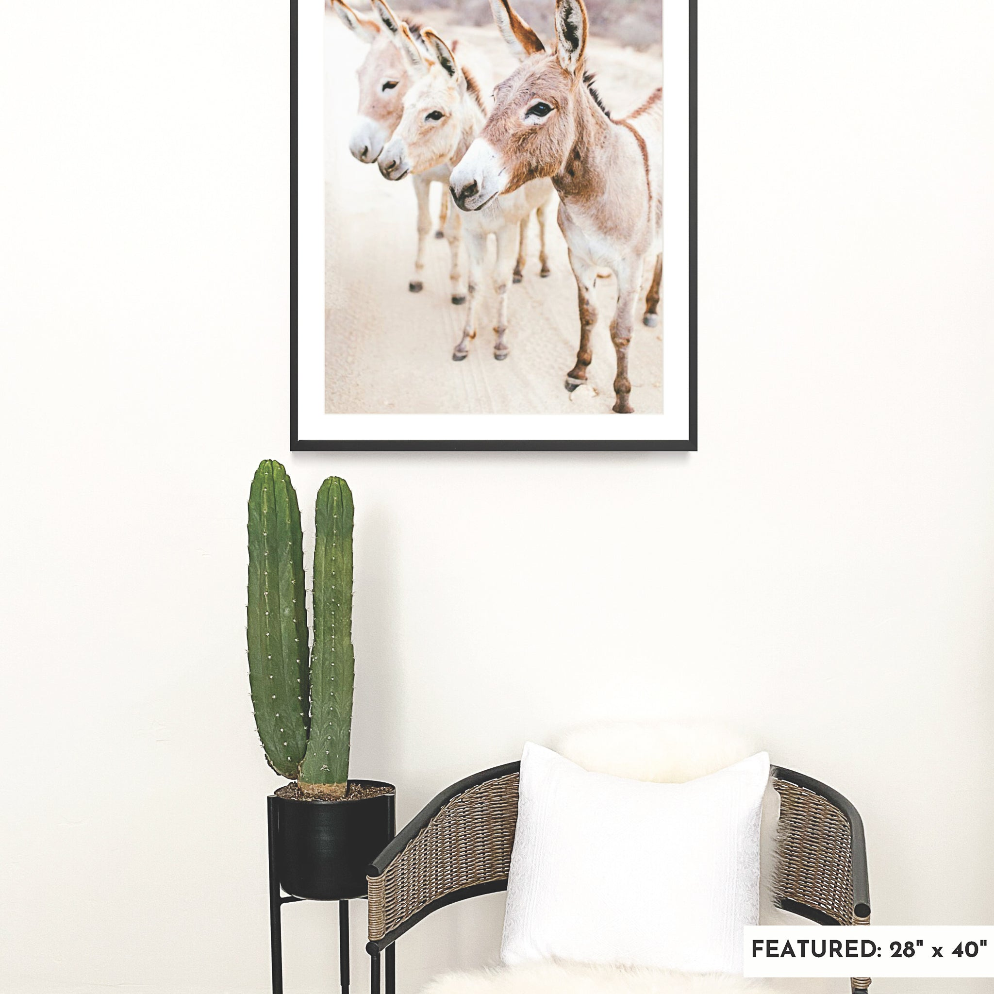 A large, framed fine art print featuring three burros in the Baja desert is on a white wall with a large cactus in a black planter and a rattan chair.