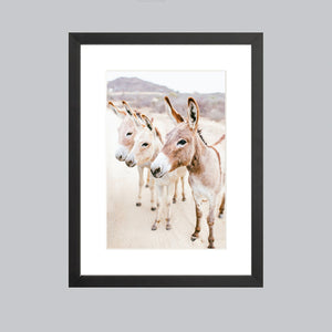 A small fine art print featuring three donkeys in Baja, Mexico in a black wood frame.
