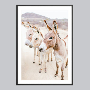 Fine art print in a black frame. Three donkeys in the Baja desert.