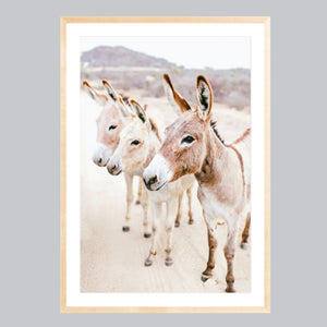 Fine art print in a natural frame. Three donkeys in the Baja desert.