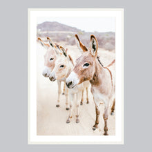 Load image into Gallery viewer, Fine art print in a white frame. Three donkeys in the Baja desert.
