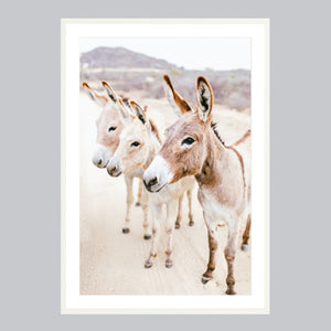 Fine art print in a white frame. Three donkeys in the Baja desert.