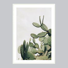 Load image into Gallery viewer, Baja 02: Desert Cacti