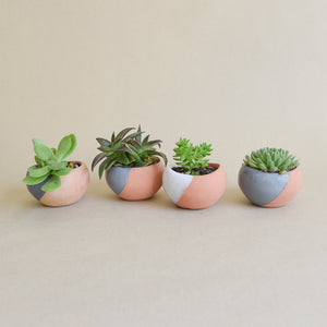 Four tiny planters with tiny succulents.