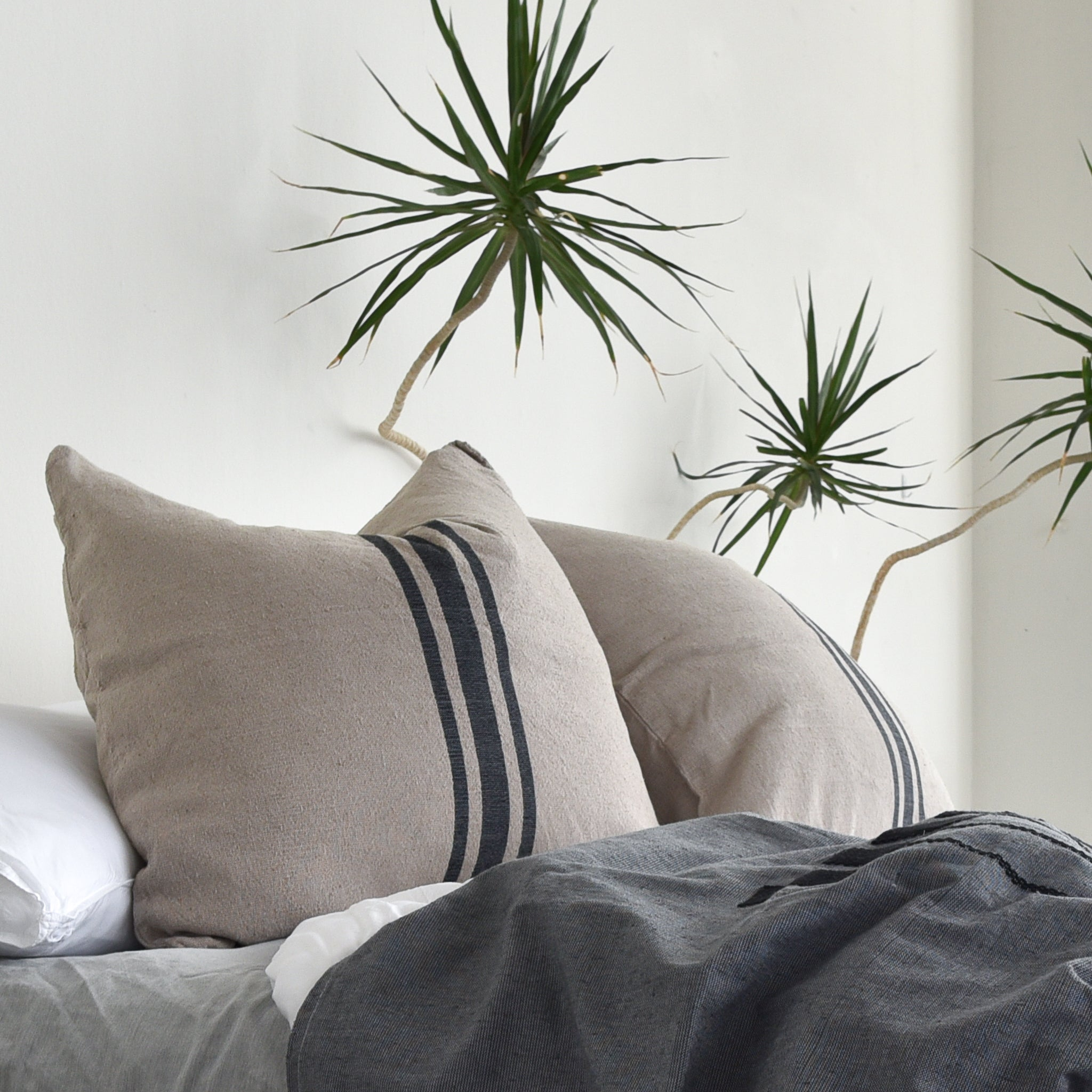 A pair of cotton euro shams with a center stripe design on a messy, unmade bed alongside a tall yucca plant.