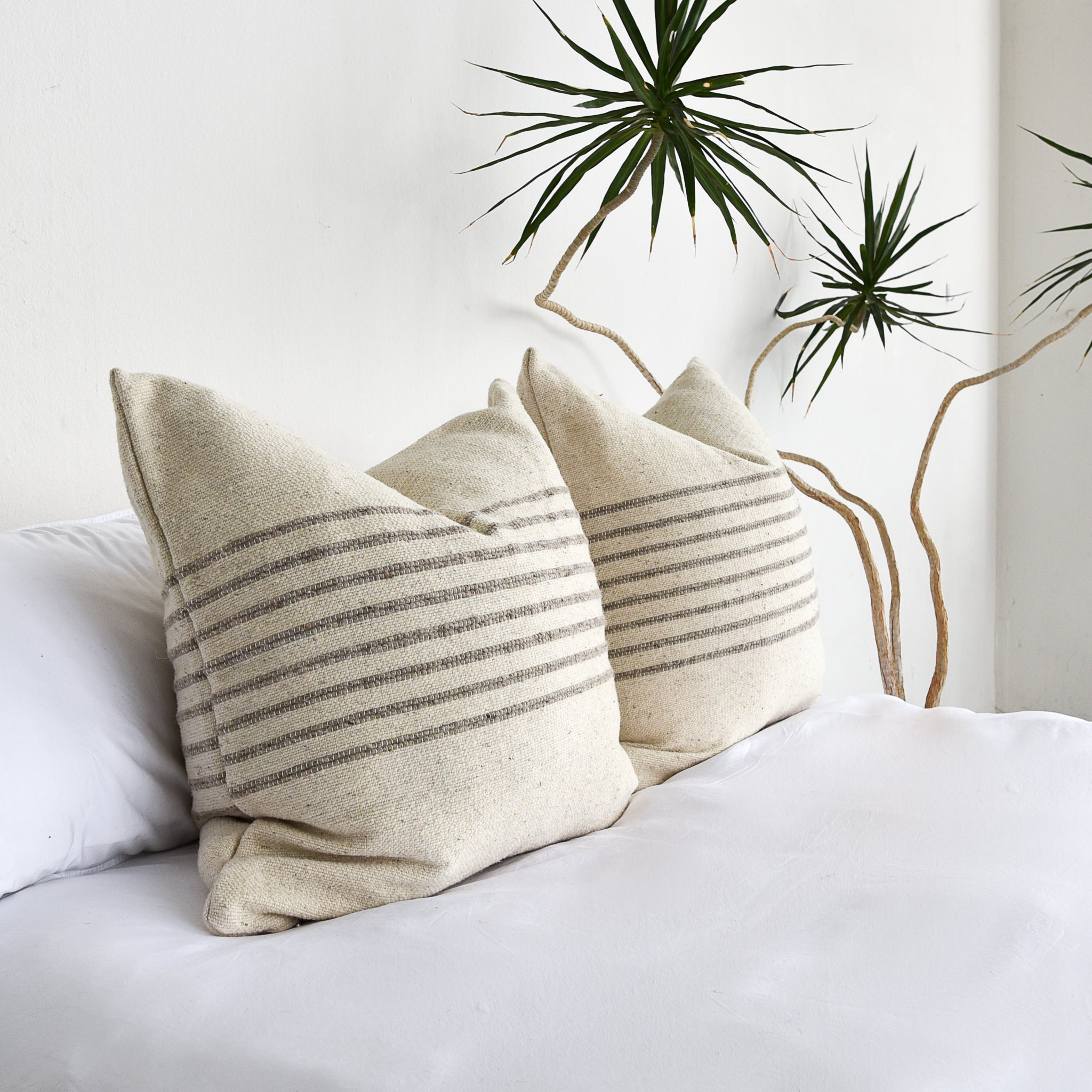 A pair of wool large throw pillows on a bed with all white bedding. A large yucca indoor plant is next to the bed.