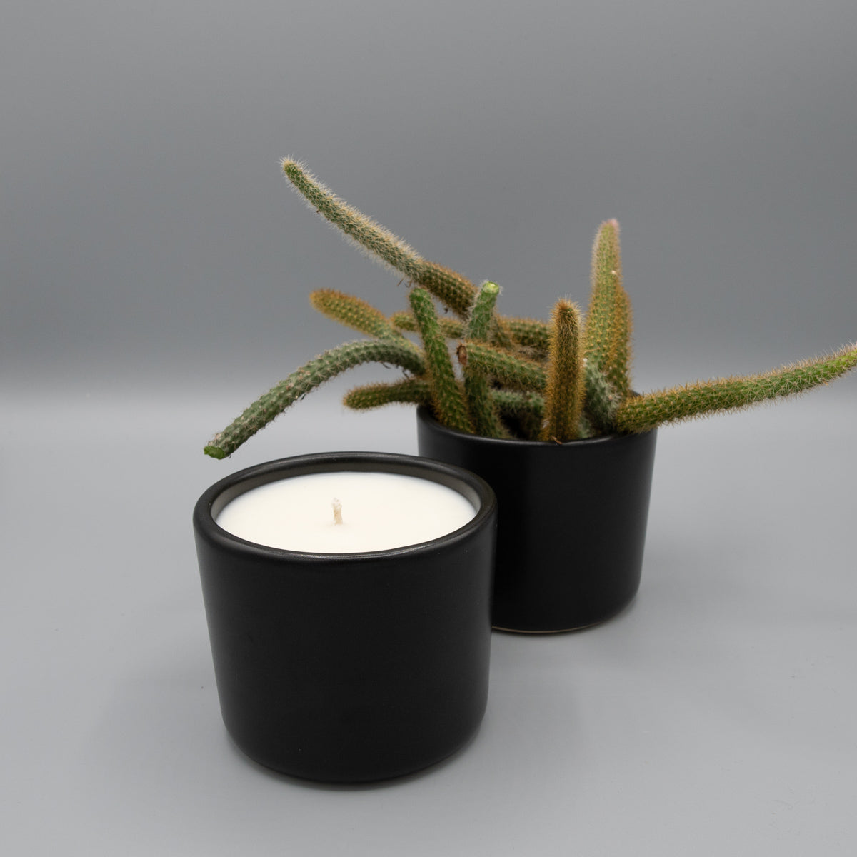A small black ceramic candle re-used as a planter with cacti.