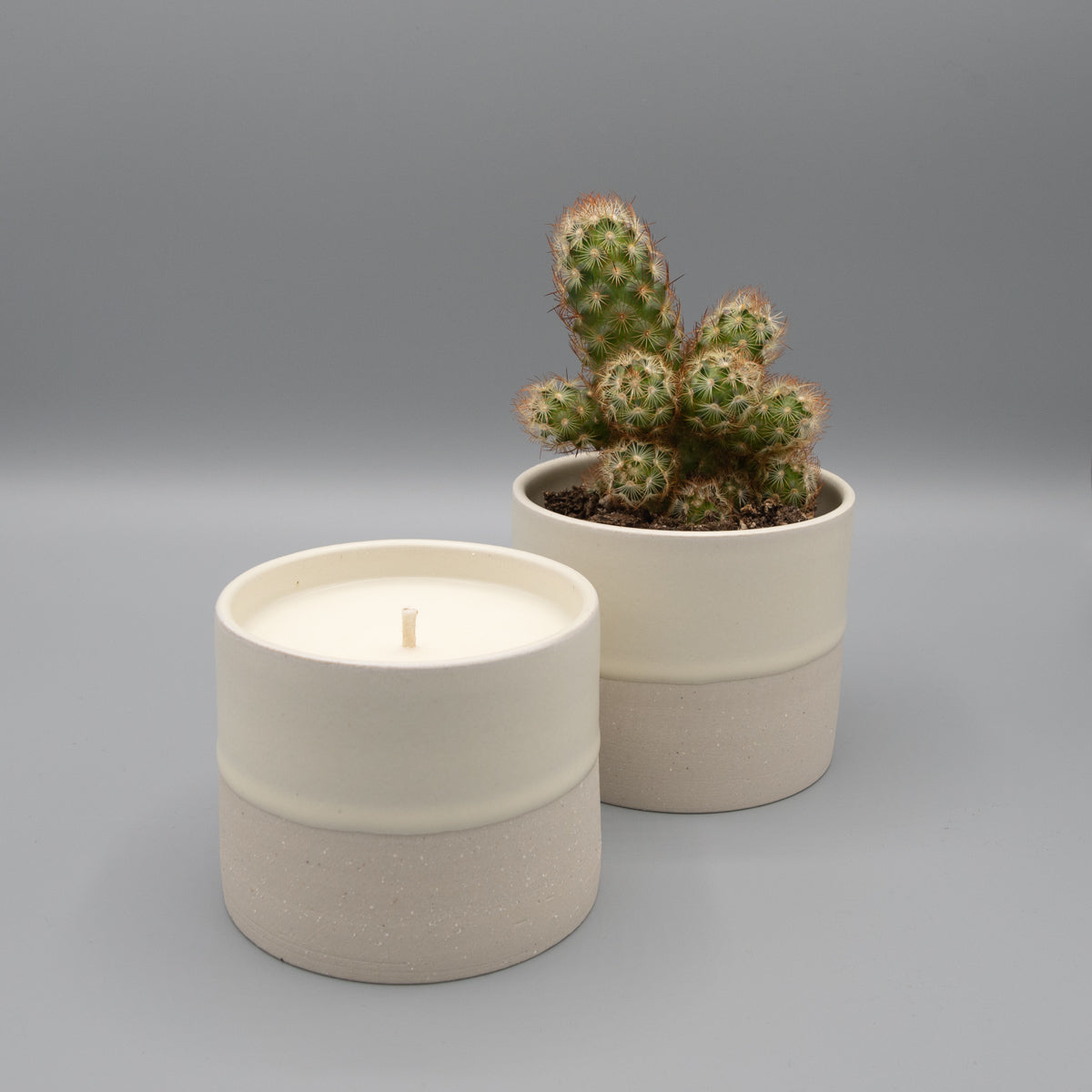 Small white ceramic candle re-used as a planter with a small cactus.
