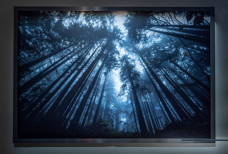 "Forest Reaching to Sky / Framed / Edition of 1 / 48"" x 70"" / Archival Pigment Print"