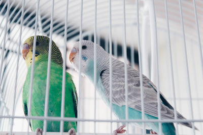 Cleaning tips for parrot owners