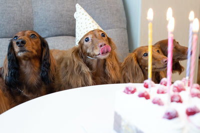 NYE Survival Guide: how to keep your pets safe & calm