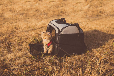 Travel tips for cat owners