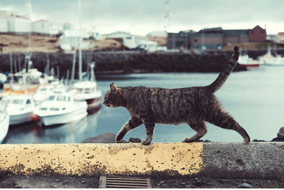 6 worldwide cities perfect for cat people