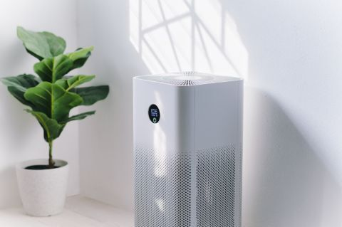 air purifier next to a plant in the living room