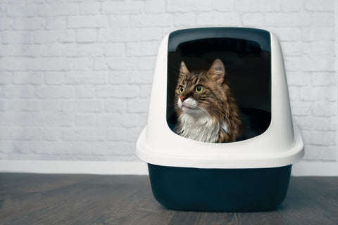 cat sitting comfortably in a clean litter box