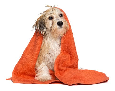 dog wrapped in a towel after being washed at the spa