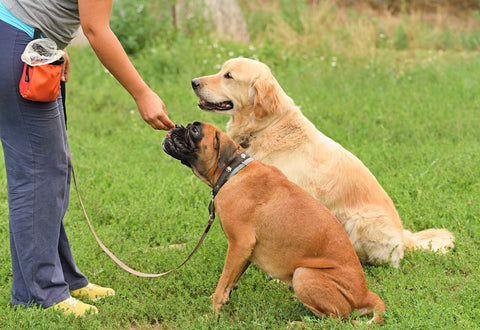 dogs being trained with a treat pouch for positive reinforcement