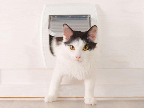 Insect Screen Cat Door - Catnetsuk