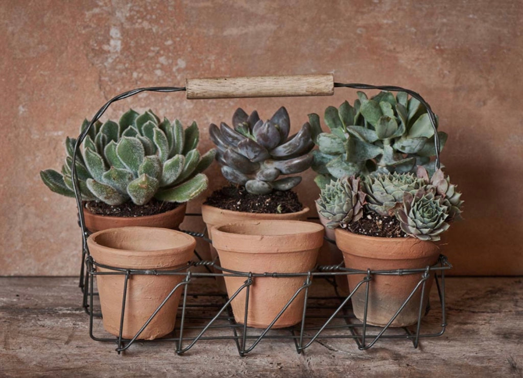 Terracotta Planter Set